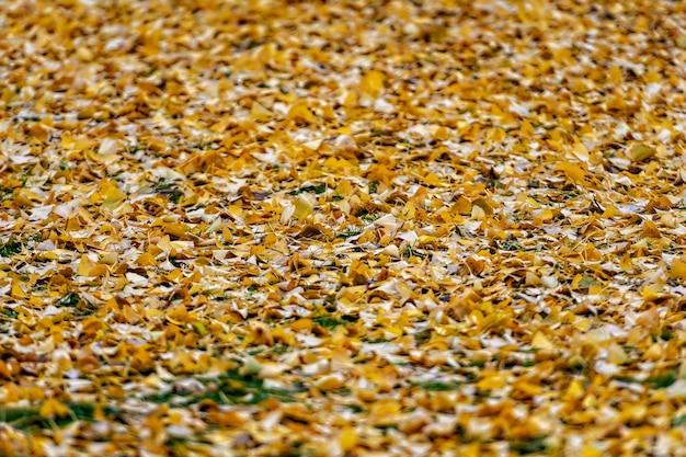 Suelo cubierto con muchas hojas de otoño