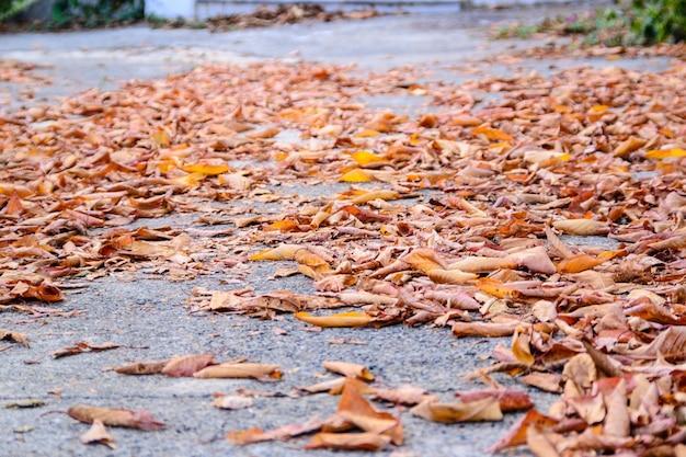 Suelo con hojas secas.