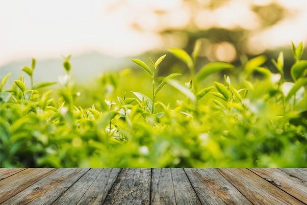 Suelo de madera té verde y hojas frescas.