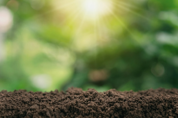 Suelo para plantar con desenfoque verde y fondo de la luz del sol