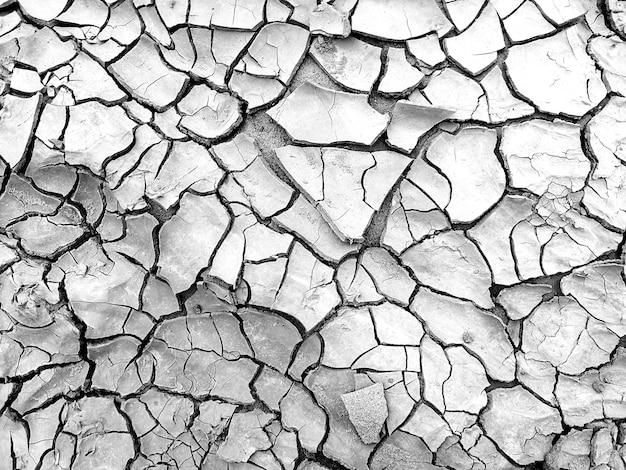 Suelo seco en fondo blanco y negro