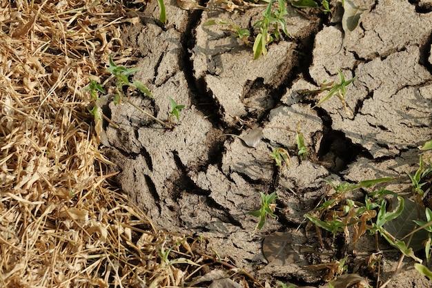 Suelo de tierra seco y agrietado
