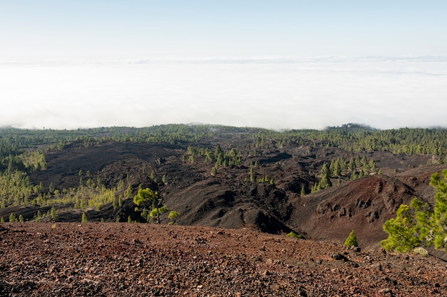 Suelo volcánico con bosque de hoja perenne