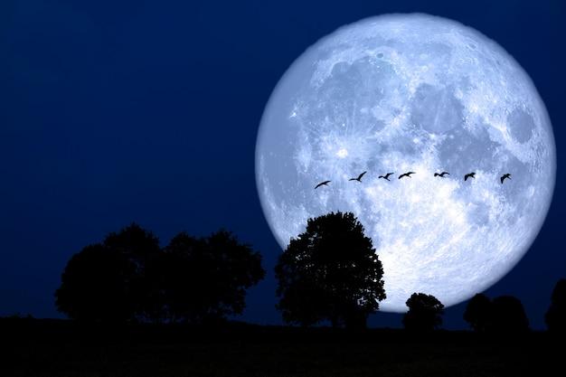 Súper nevada luna silueta trasera pájaro ontree en campo