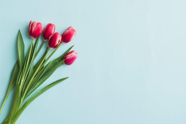 Superficie azul con tulipanes para el día de la madre