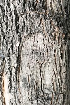 Superficie de la corteza de los árboles