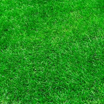 Superficie de la hierba verde
