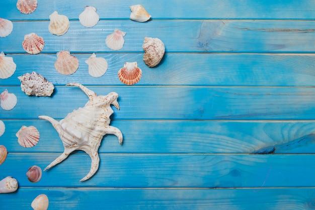 Superficie de madera azul con conchas marinas