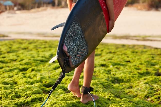 Surfista irreconocible se encuentra descalzo sobre la superficie verde al aire libre, lleva la tabla de surf, se fija a la correa