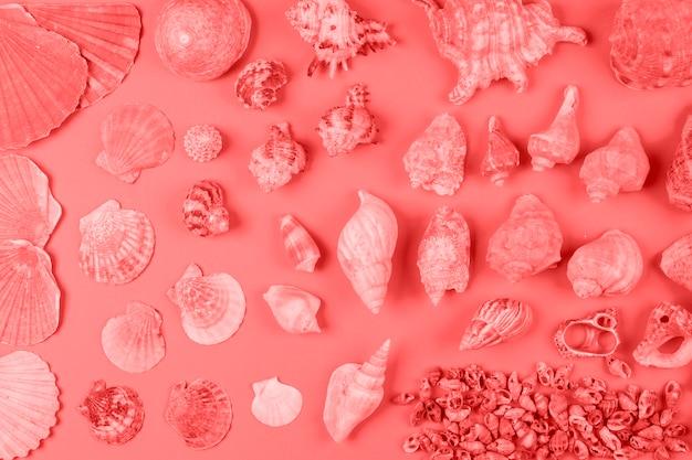 Surtido de conchas marinas en color coral contra fondo.