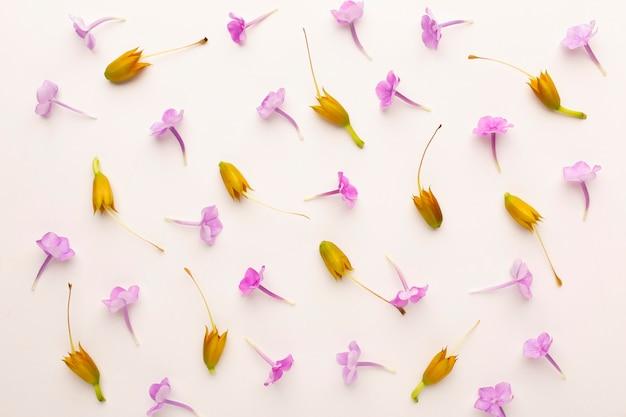 Surtido de flores de vista superior