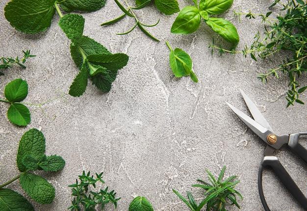 Surtido de hierbas aromáticas frescas desde arriba sobre hormigón gris. menta, tomillo, albahaca, romero, vista superior.
