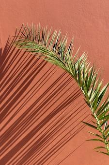 Surtido minimalista de plantas naturales sobre un fondo monocromático