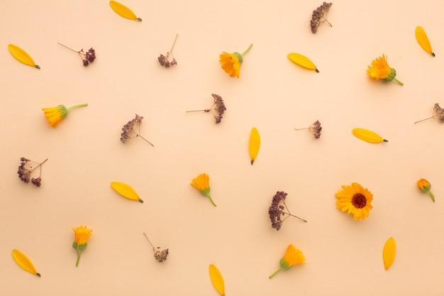 Surtido de pétalos de flores de vista superior