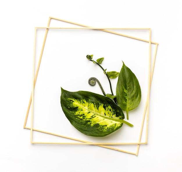 Surtido plano laico de hojas verdes con marcos vacíos