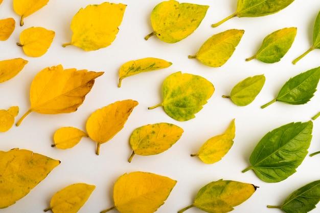 Surtido de primer plano del concepto de hojas de otoño