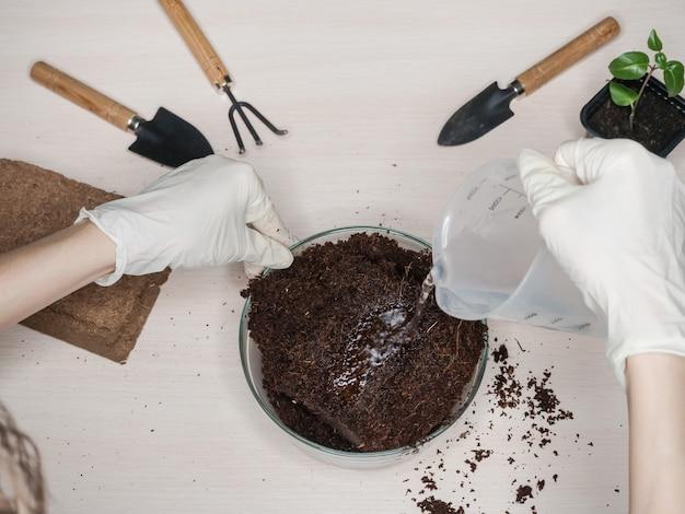 Sustrato de coco para tierra. briqueta de sustrato de coco prensado.