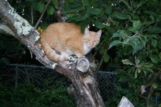 Tabby en árbol