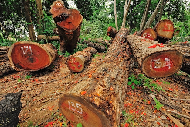 Tala de árboles ilegal en el corazón de las montañas, tailandia.