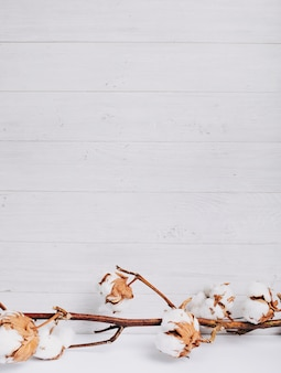 Tallo natural de flores de algodón produciendo algodón crudo contra tablas de madera.