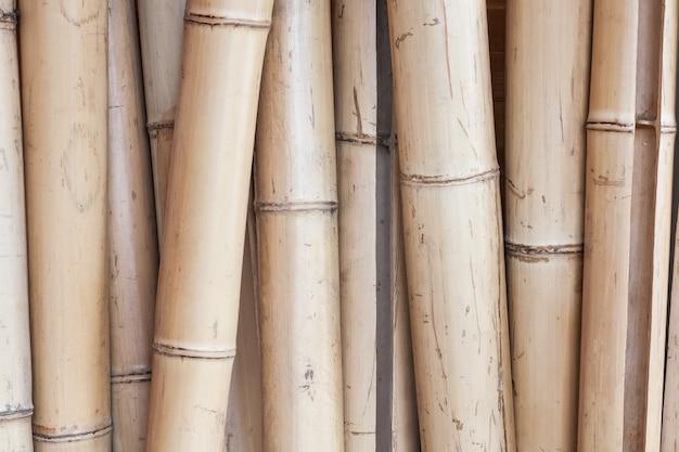 Tallos de bambú seco para el fondo