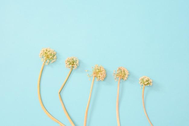 Tallos de flores con extrañas formas naturales aisladas sobre fondo suave estilo vintage.