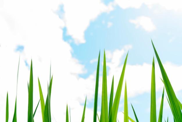 Tallos de hierba verde.