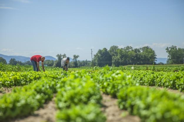 Tantas verduras en este campo