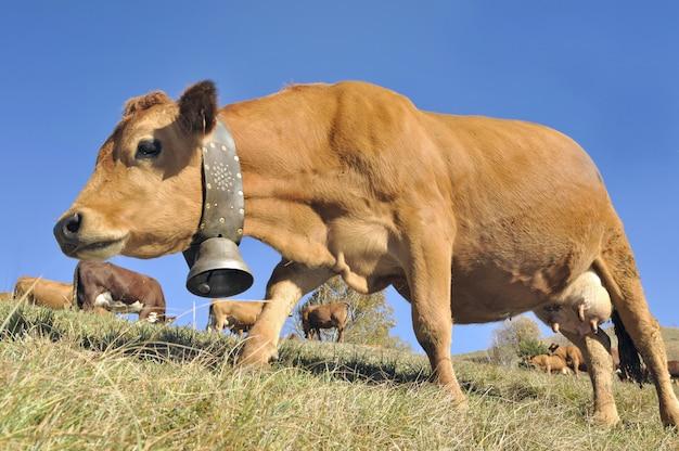 Tarine de lácteos con una campana