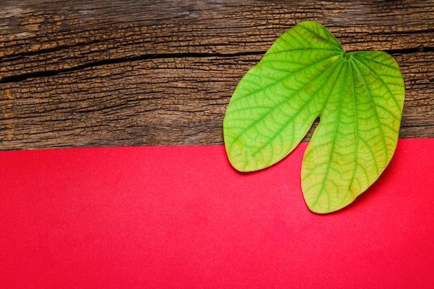 Tarjeta de felicitación de dussehra con apta / bauhinia racemosa