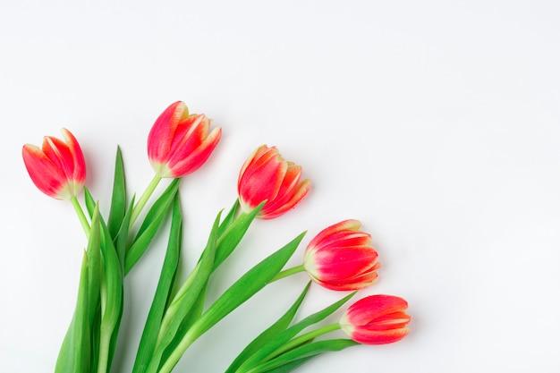 Tarjeta de felicitación con marco de tulipanes frescos sobre fondo blanco. . maqueta plana para sus letras o espacio de copia para texto