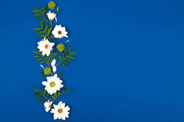 Tarjeta con flores blancas y hojas verdes para cumpleaños, día de la madre o boda. fondo de papel azul.