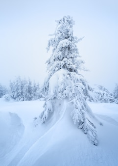 Tarjeta de navidad con un paisaje invernal. abeto de nieve en un ventisquero