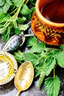 Té con hojas verdes de melisa fresca