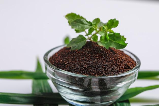 Té negro seco y hojas de menta verde sobre fondo blanco.