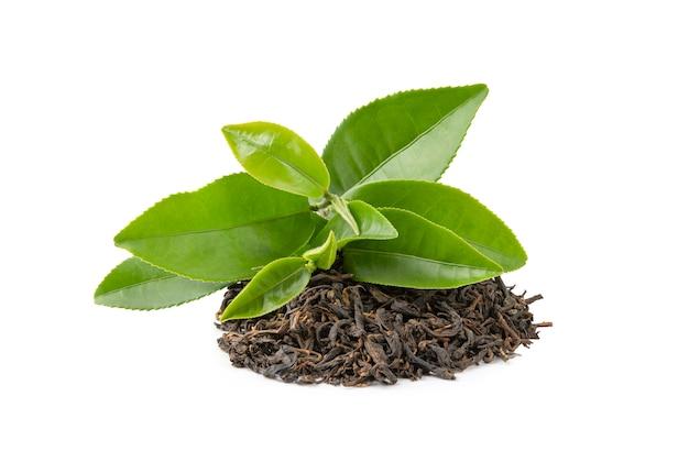 Té seco con hojas verdes