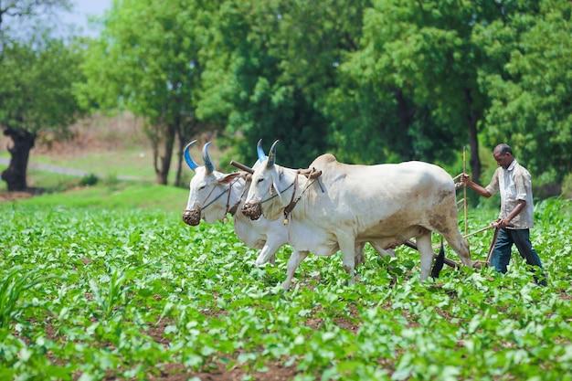 Técnica de cultivo indio