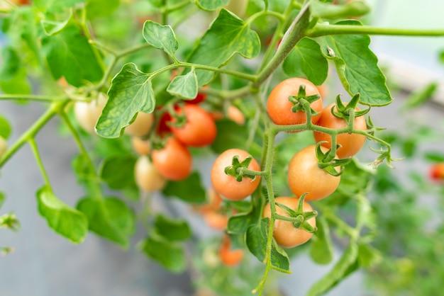 Tecnología para el cultivo de hortalizas en invernaderos.