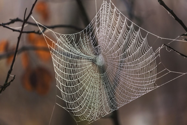 Telaraña húmeda en el bosque. fondo de halloween y otoño.