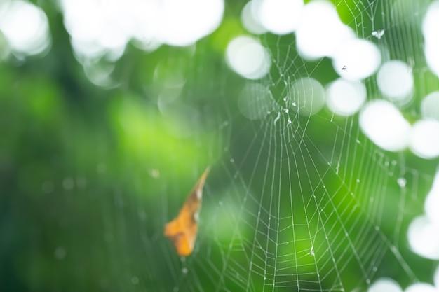Telaraña en la naturaleza tejida por una araña