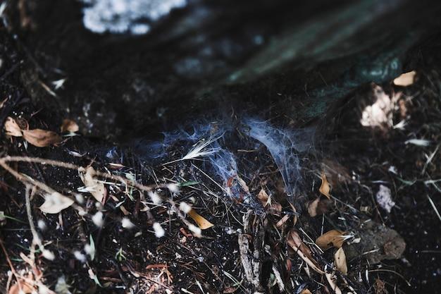Telaraña en el suelo entre las hojas secas