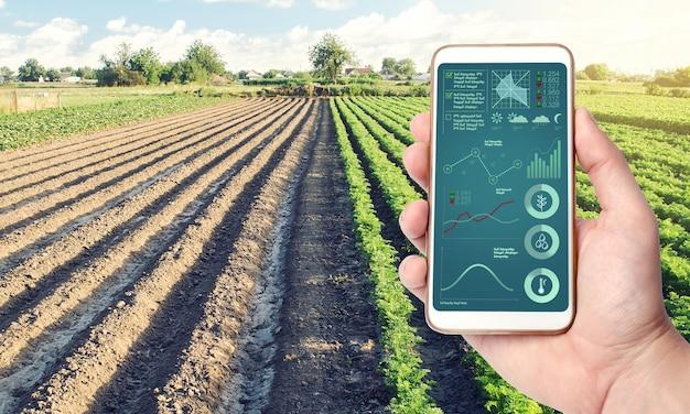 Teléfono con infografías en el fondo de una plantación de campo agrícola proceso de maduración de cultivos