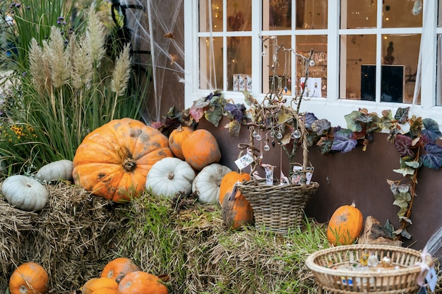 Tema de decoración de otoño en un jardín público al aire libre, calabazas aterradoras en el suelo.
