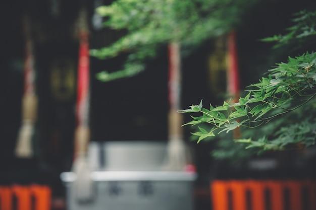 Templo japonés con hojas de arce japonés en estilo vintage de kyoto
