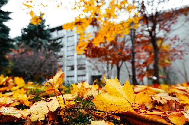 Temporada de otoño de árboles y hojas.
