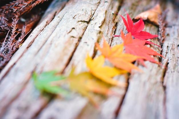 Temporada de otoño colorido de árbol y hojas