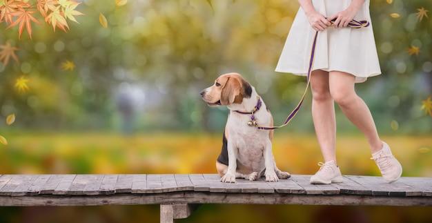 Temporada de otoño y otoño. mujer asiática junto con perro como mejor amigo. estilo de vida al aire libre en el parque.