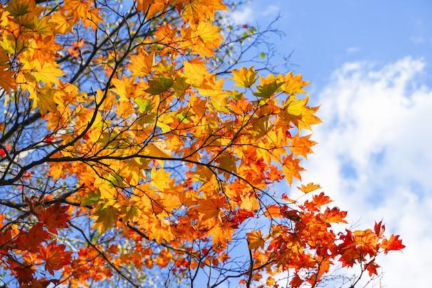 Temporada de otoño en el parque maruyama