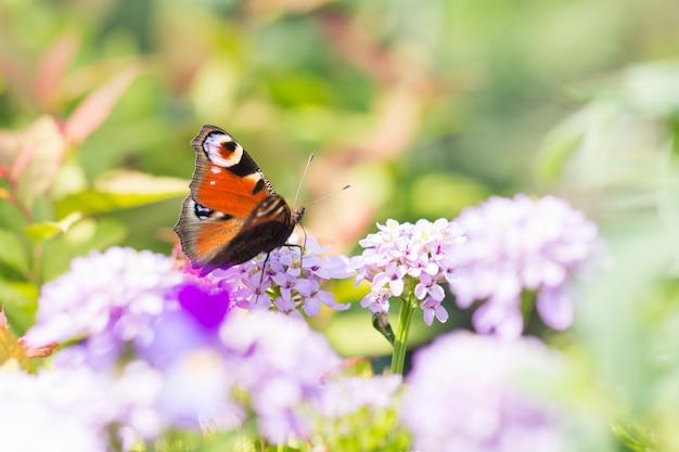Ternura y belleza en la naturaleza. hermosa mariposa en una flor.