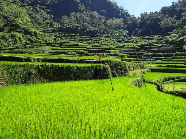 Las terrazas de arroz en bangaan, filipinas
